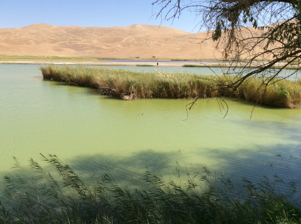 Lac oasis désert de Gobi