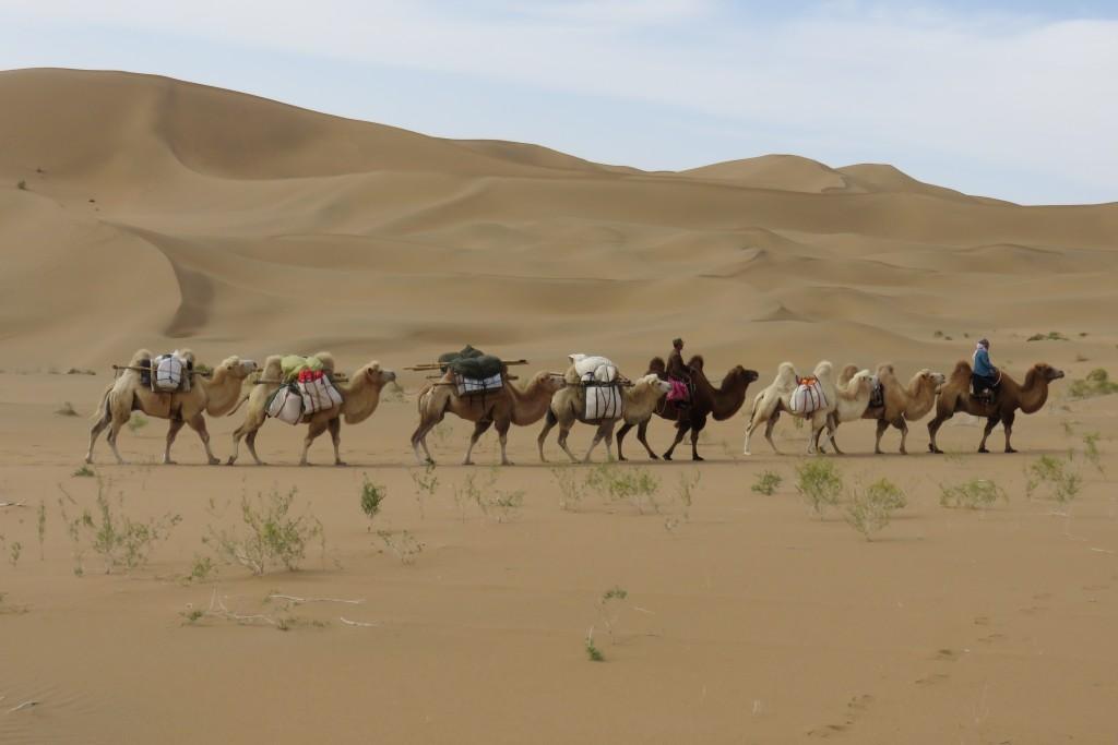 Caravane chameaux désert de Gobi