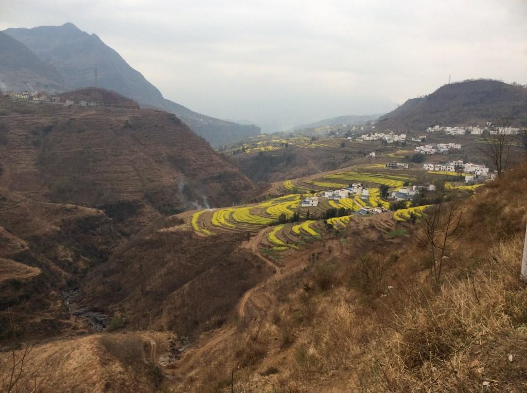 Champs en terrasses Chine colza Leibo