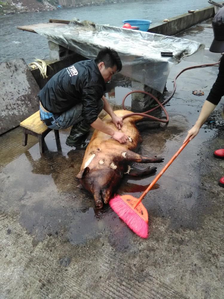 Tuer le cochon à Xining